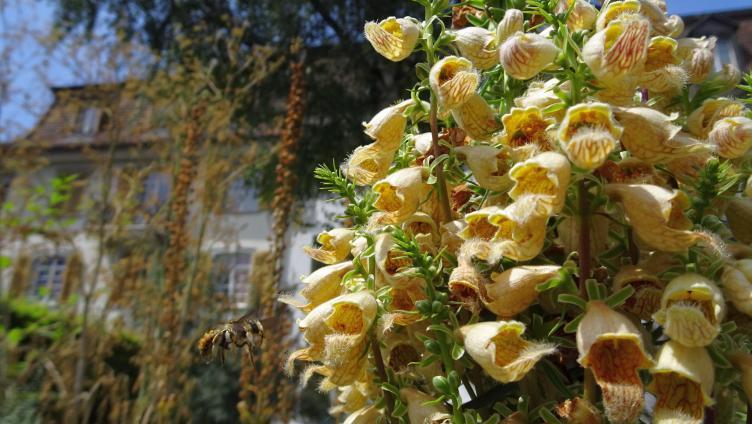 Wettbewerb Naturmuseum Die Besten Gartenbilder Erkoren